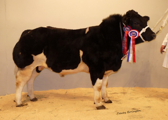 Solway View Emirates wins Male Champion at Calf Show